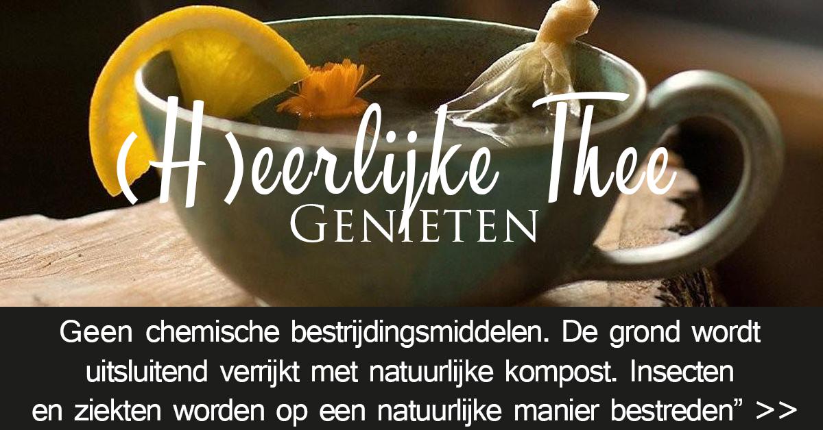 Bashya Biologische thee, kruidenthee, medicinale kruiden, teatime, groene thee